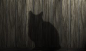 cat-233367_960_720