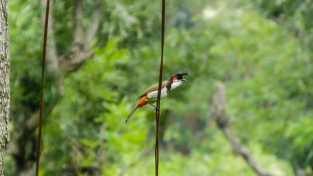 bird-photography-naturaleza-pajaro-carpintero-fauna-pajaros_1376-15
