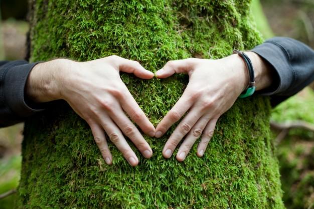 manos-en-forma-de-corazon-en-un-arbol_1004-13
