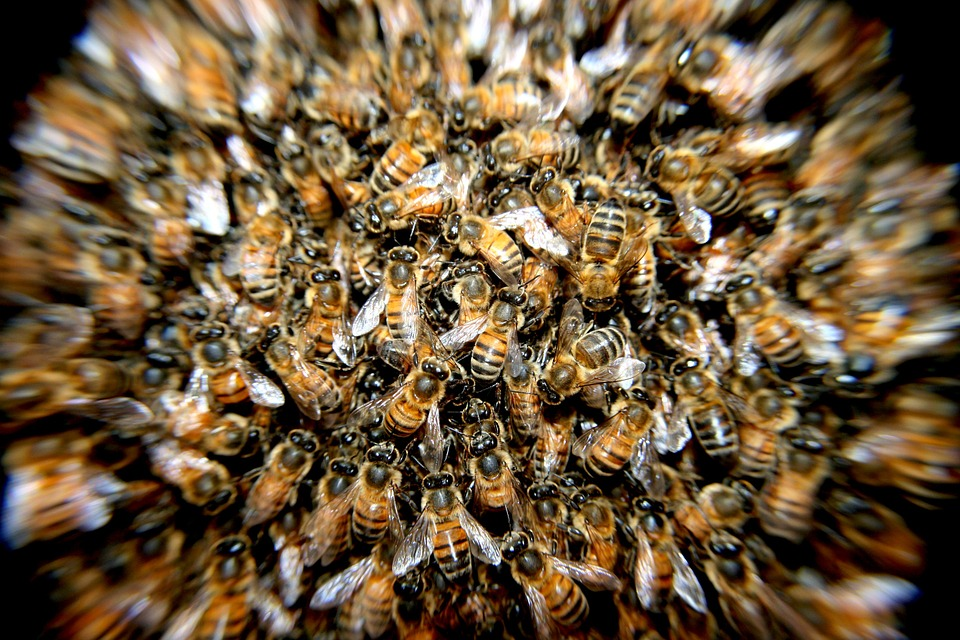 bees-276190_960_720