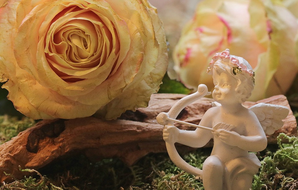 rose-2042271_960_720
