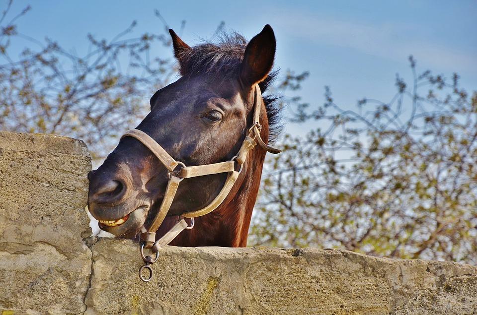 horse-2250019_960_720