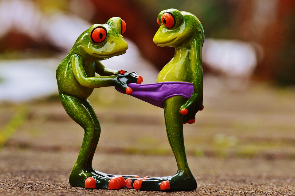 frogs-1158958_960_720